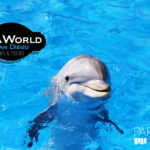 Tips and Tricks for Sea World San Diego