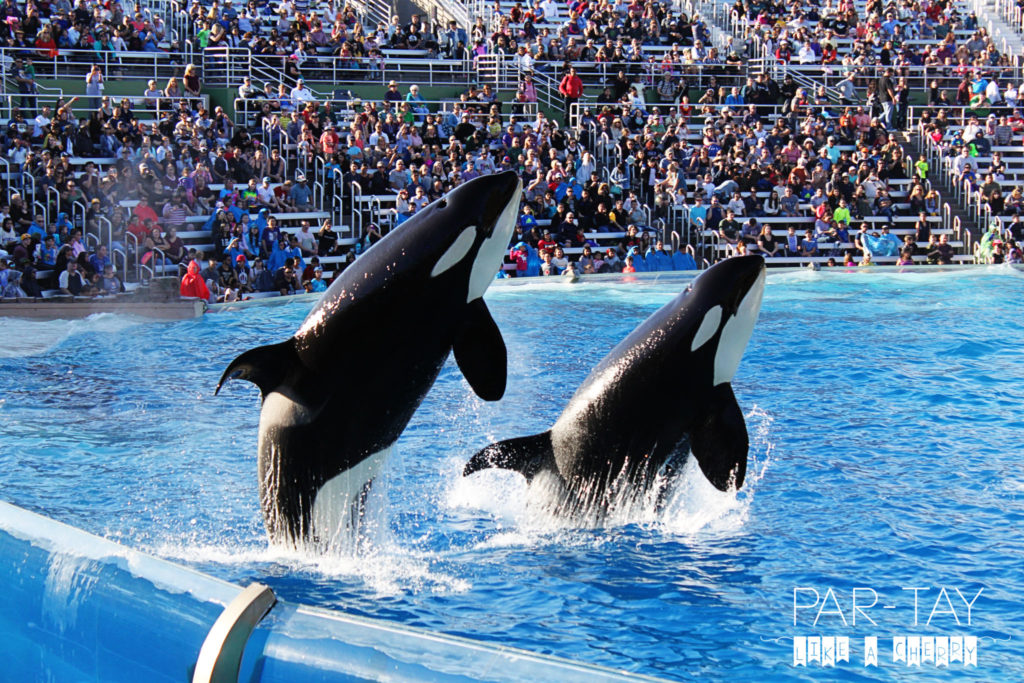 sea world san diego tips and tricks, if its your first time to sea world san diego read this first and do sea world like a pro! maximize your time at sea world and learn the best tips to save money!